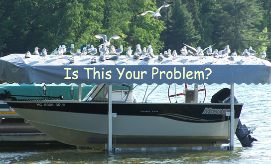Seagull Stopper - Keep Seagulls Off Your Boat Canopy - Glen Lake
